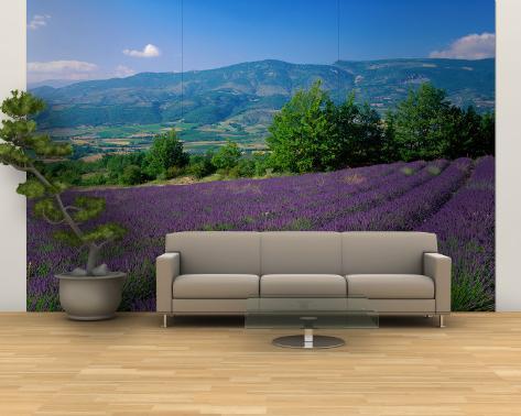 Flowers in Field, Lavender Field, La Drome Provence, France Wall Mural – Large