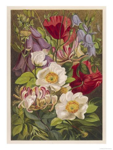 Flowers of July and August Stampa giclée