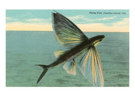 Flying Fish, Catalina, California Art Print
