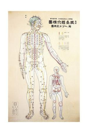 Focal Points of the Human Body, Front View, Watercolor ...