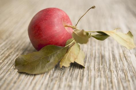 A Gala Apple with Leaves Photographic Print