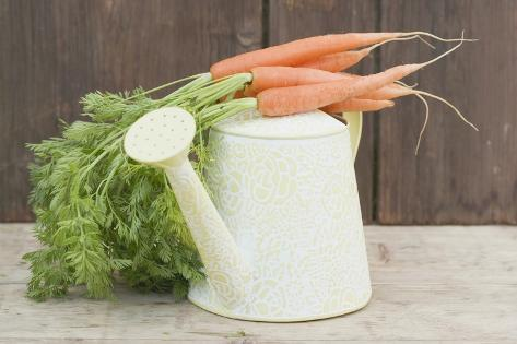 A Watering Can with Carrots Photographic Print