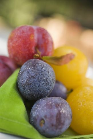 Different Types of Plums Photographic Print