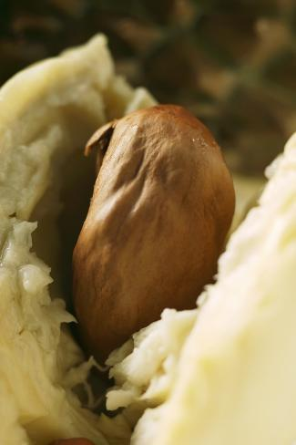 Durian (Detail of Flesh with Stone) Photographic Print