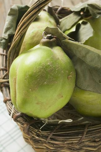Fresh Quinces with Leaves in a Basket Valokuvavedos
