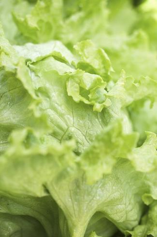 Iceberg Lettuce (Detail) Photographic Print