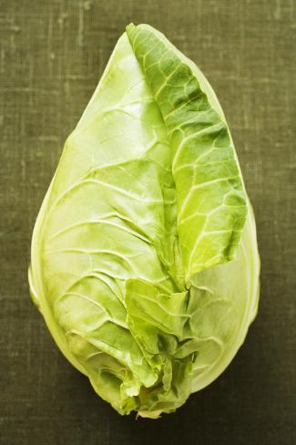 Pointed Cabbage on Green Background Photographic Print