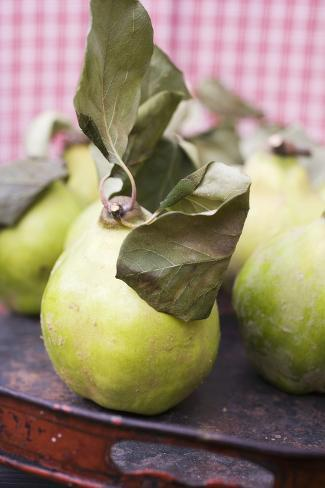 Quinces with Leaves on Tray Photographic Print