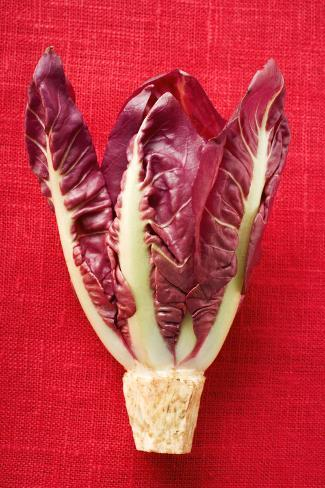 Radicchio on Red Background Photographic Print