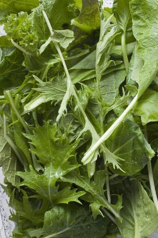 Spinach and Japanese Mizuna Photographic Print