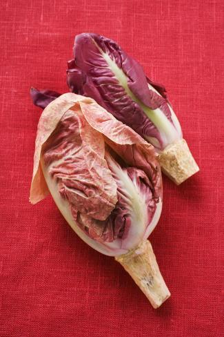 Two Different Types of Radicchio Photographic Print