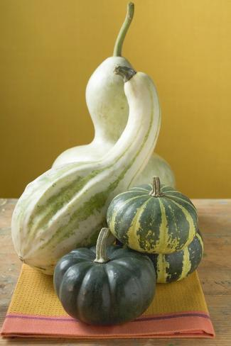 Various Pumpkins and Squashes on Cloth Photographic Print