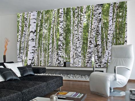 Forest of birch trees wallpaper mural for Birch tree forest wall mural