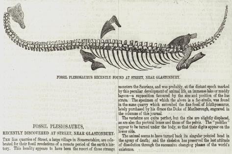 Fossil Plesiosaurus Recently Found at Street, Near Glastonbury Giclee Print