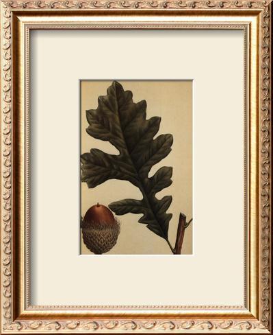 Over Cup White Oak Framed Art Print