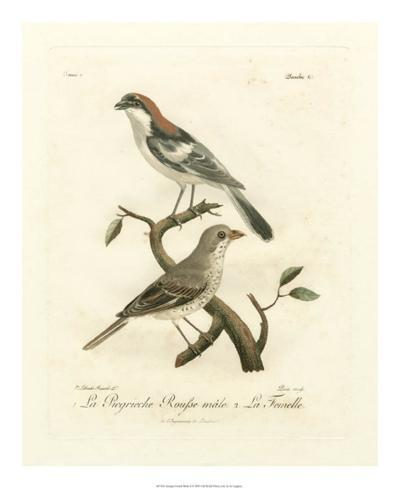 Antique French Birds II Giclee Print