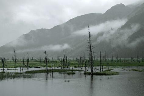 swampy landscape in anchorage destroyed by a tsunami alaska