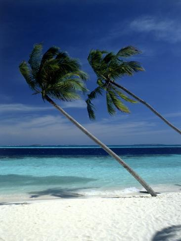 Palm Trees on Tropical Beach, Maldives Photographic Print