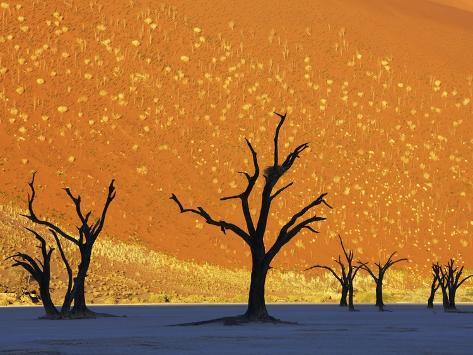 Dead Trees in Dead Vlei Photographic Print