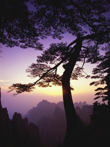 Huangshan Pine in the Huangshan Mountains Photographic Print