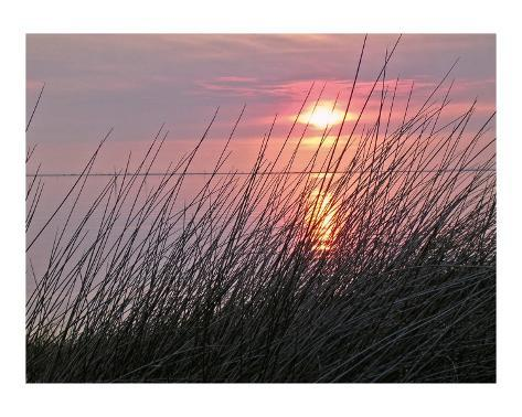 Grass, Sunset Stretched Canvas Print