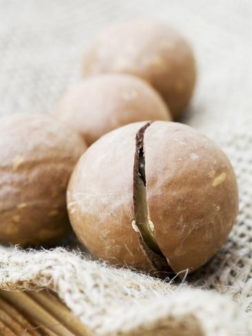Macadamia Nuts Photographic Print