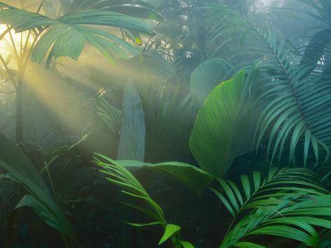 Rainforest Vegetation in Morning Light Photographic Print