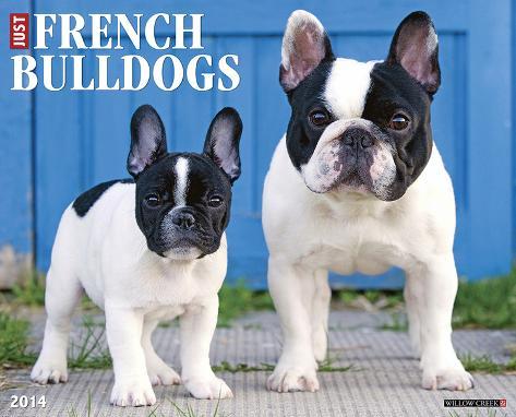 French Bulldogs - 2014 16-Month Calendar Calendars