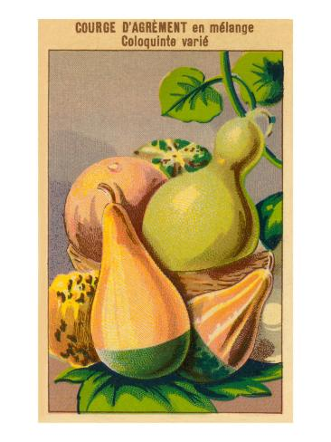 French Gourd Selection Seed Packet Art Print
