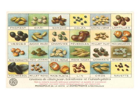 French Grain Chart Taidevedos