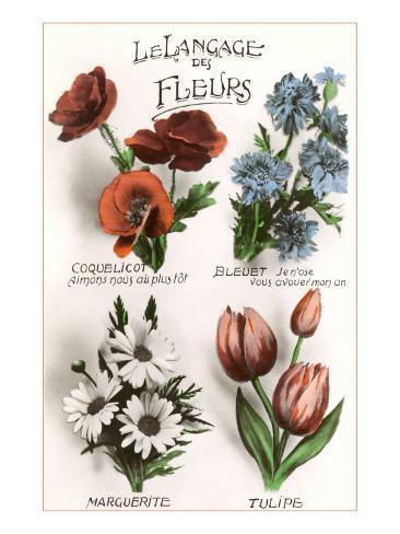French Language of Flowers Art Print