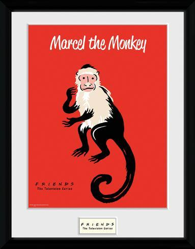 Friends- Marcel The Monkey Collector Print - AllPosters.co.uk