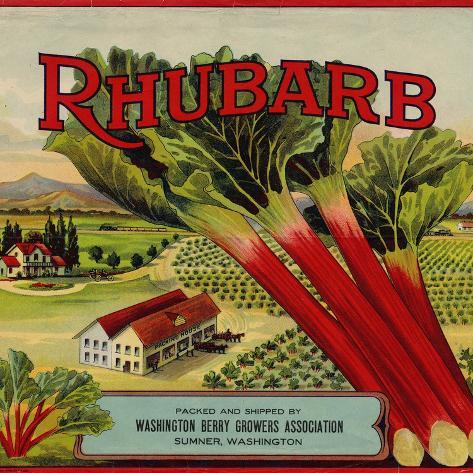 Fruit Crate Labels: Rhubarb; Packed and Shipped by Washington Berry Growers Association Lámina