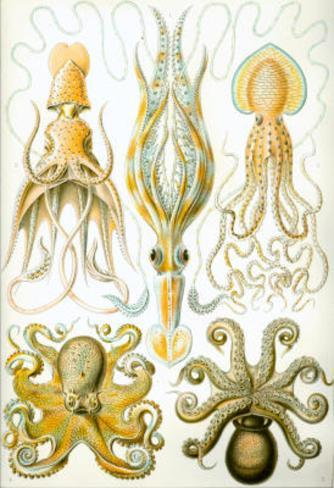 Gamochonia Nature Art Print Poster by Ernst Haeckel Masterprint