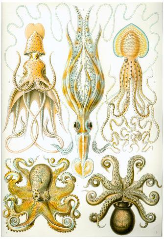 Gamochonia Nature Art Print Poster by Ernst Haeckel Poster
