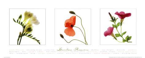 Garden Flowers II Art Print