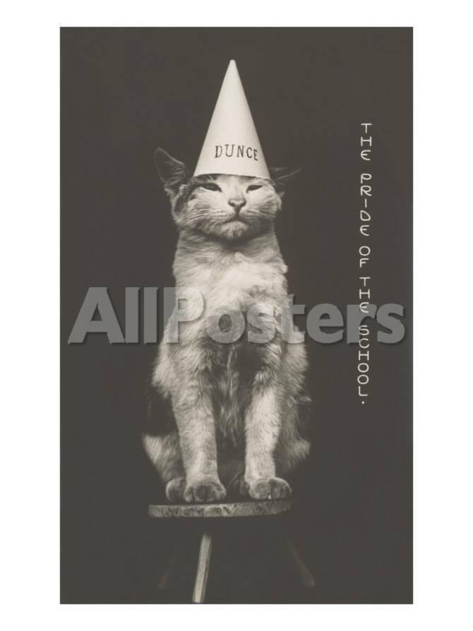 Gato con sombrero de burro Láminas en AllPosters.es