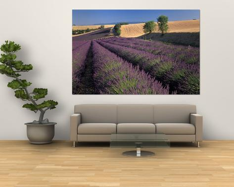 Lavender Field, Provence, France Giant Art Print