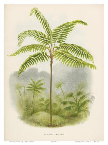 Tree Fern, 18th Century Impressão artística