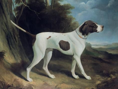 Portrait of a Liver and White Pointer Giclee Print