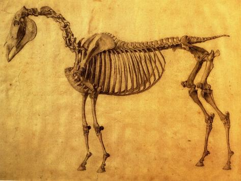 Finished Study for the First Skeletal Table of a Horse, circa 1766 Giclee Print
