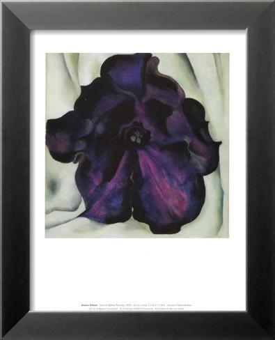 Purple Petunia Lámina enmarcada con plástico protector