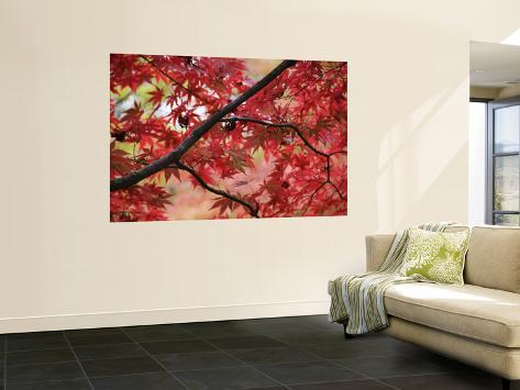 Maple Tree in Autumn Colours, Arishiyama District Wall Mural