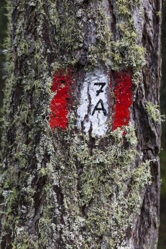 Travellingmarking on a Tree, Hiking at the Bottom of the Sas Dla Crusc, South Tyrol Photographic Print