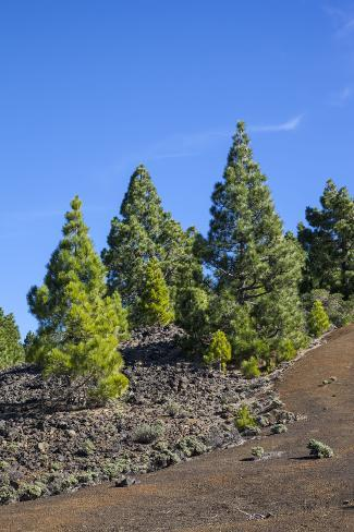 Volcano Landscape in the Nature Reserve Cumbre Vieja, La Palma, Canary Islands, Spain, Europe Photographic Print