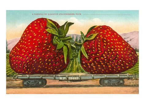 Giant Strawberries on Flatbed Taidevedos