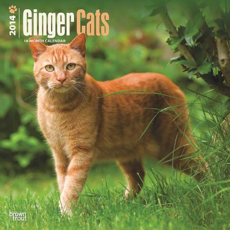 Ginger Cats - 2014 Calendar Calendars