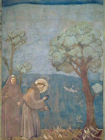 St. Francis Preaching to the Birds, 1297-99 Giclee Print