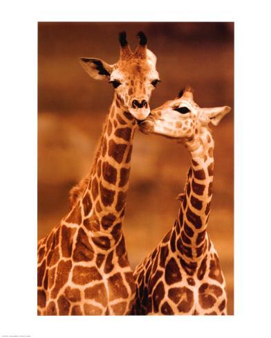 Giraffe, First Love Art Print