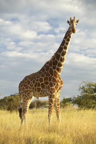 Giraffe Print Travel System